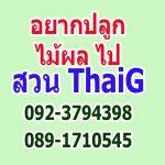สวนไทยจี ไทยเซ็นทรัลการ์เด้น